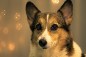 hd dog pictures