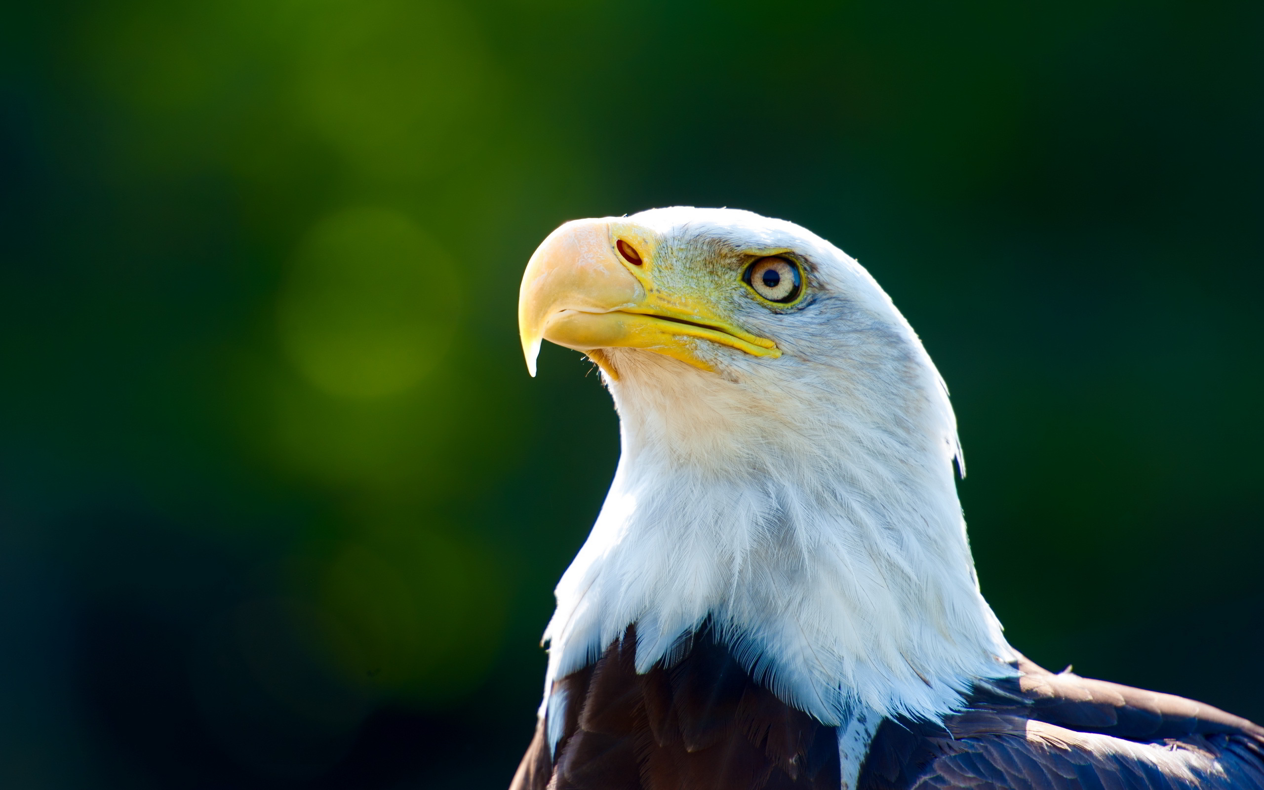 hd eagle pictures