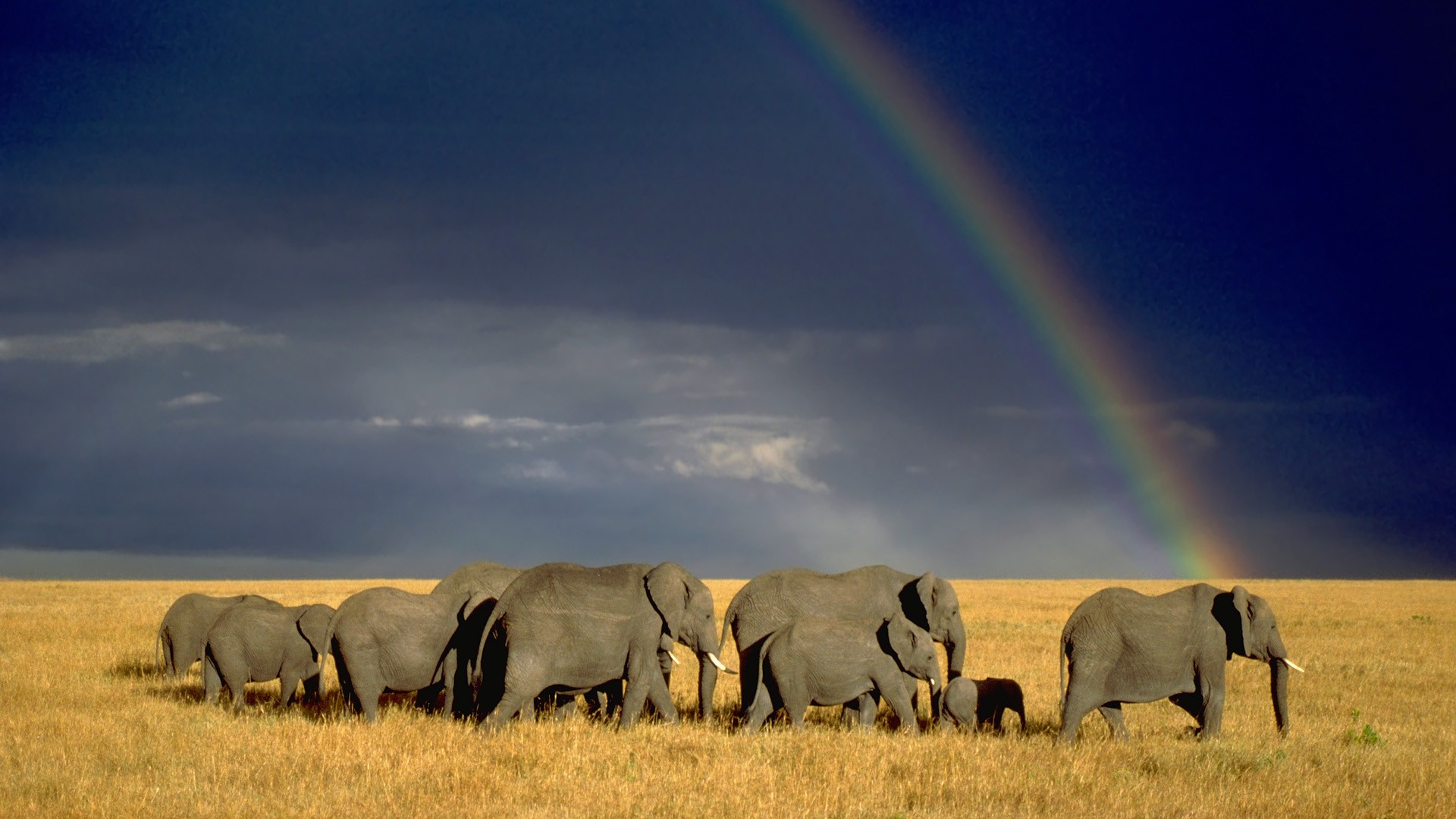 hd elephant pictures