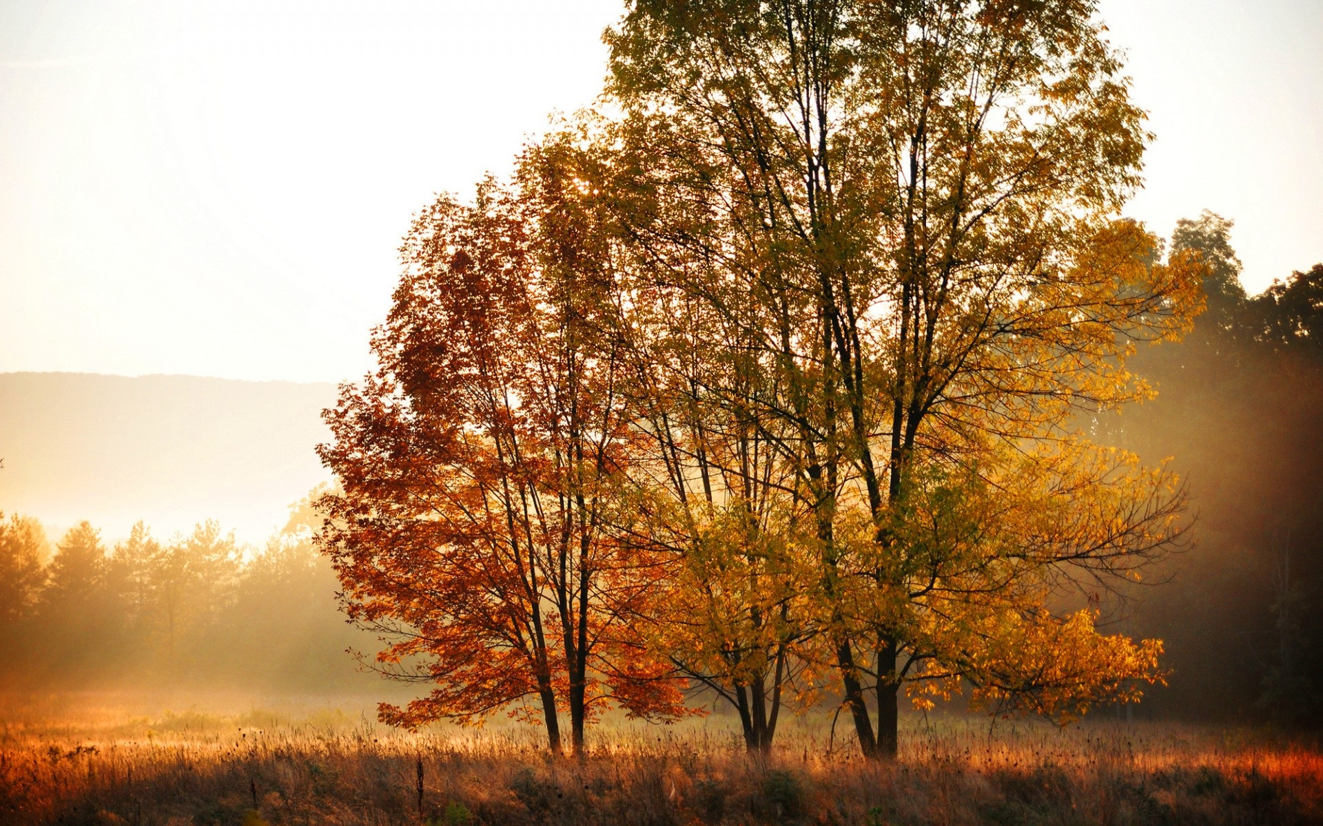 hd fall pictures wallpaper