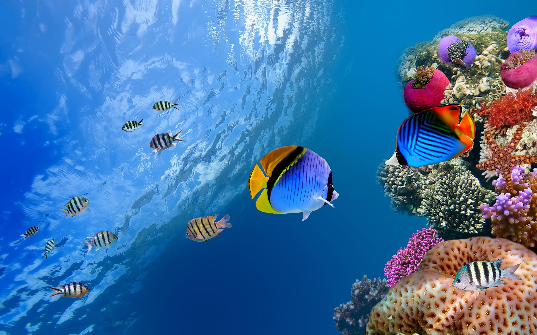 hd fish wallpaper