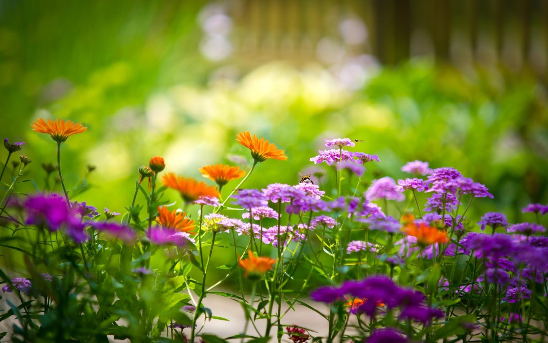 hd garden images