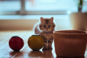 hd kitten wallpapers