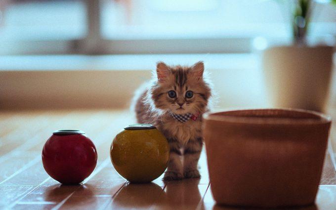 hd kitten wallpapers