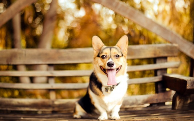hd puppy backgrounds
