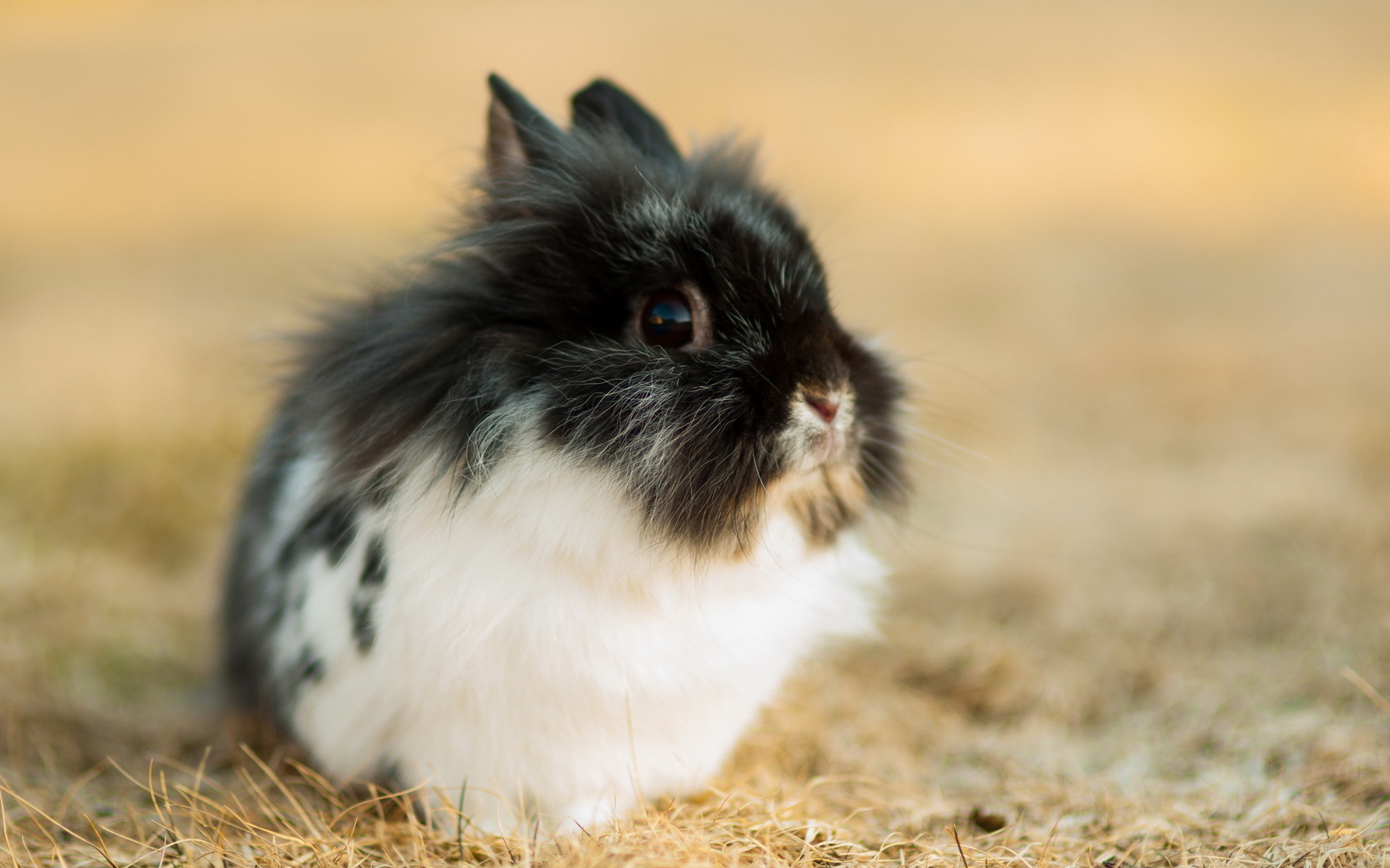 hd rabbit wallpaper