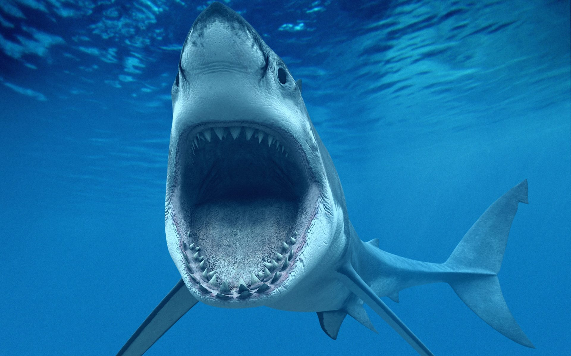hd shark pictures