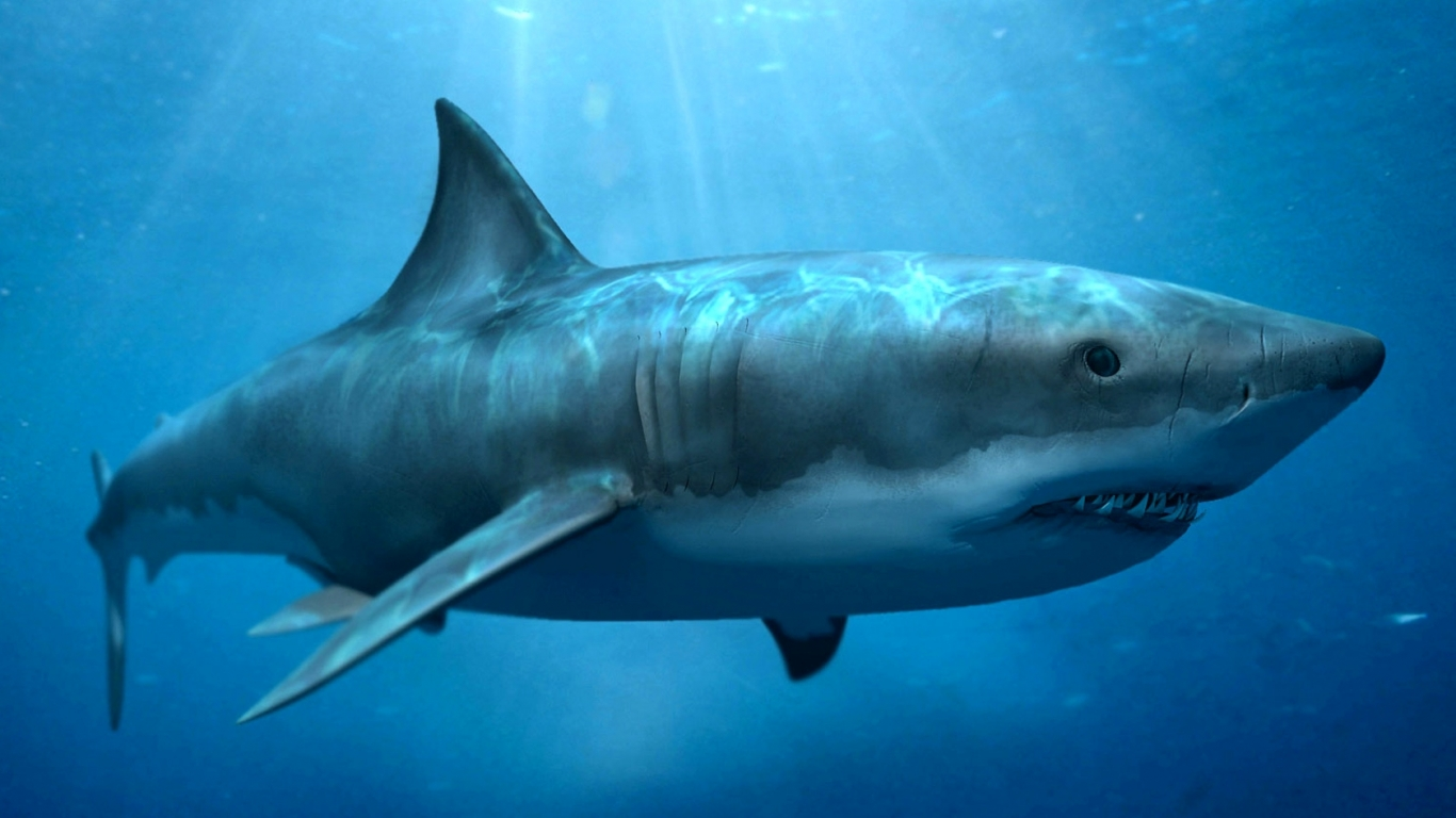 hd shark wallpapers