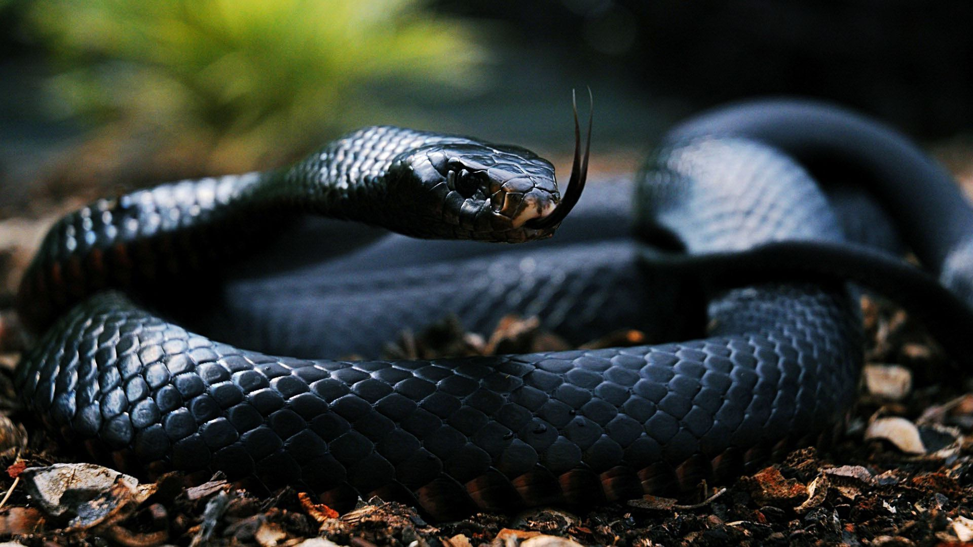hd snake photos