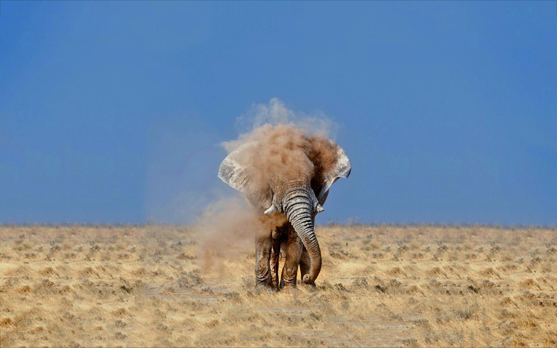 hd wallpaper elephant