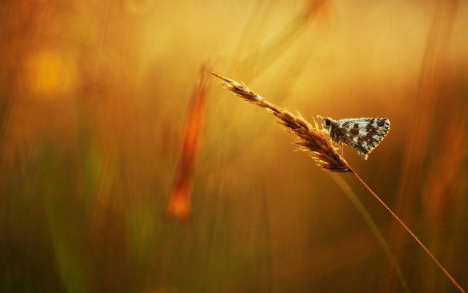 hd wallpaper of butterfly