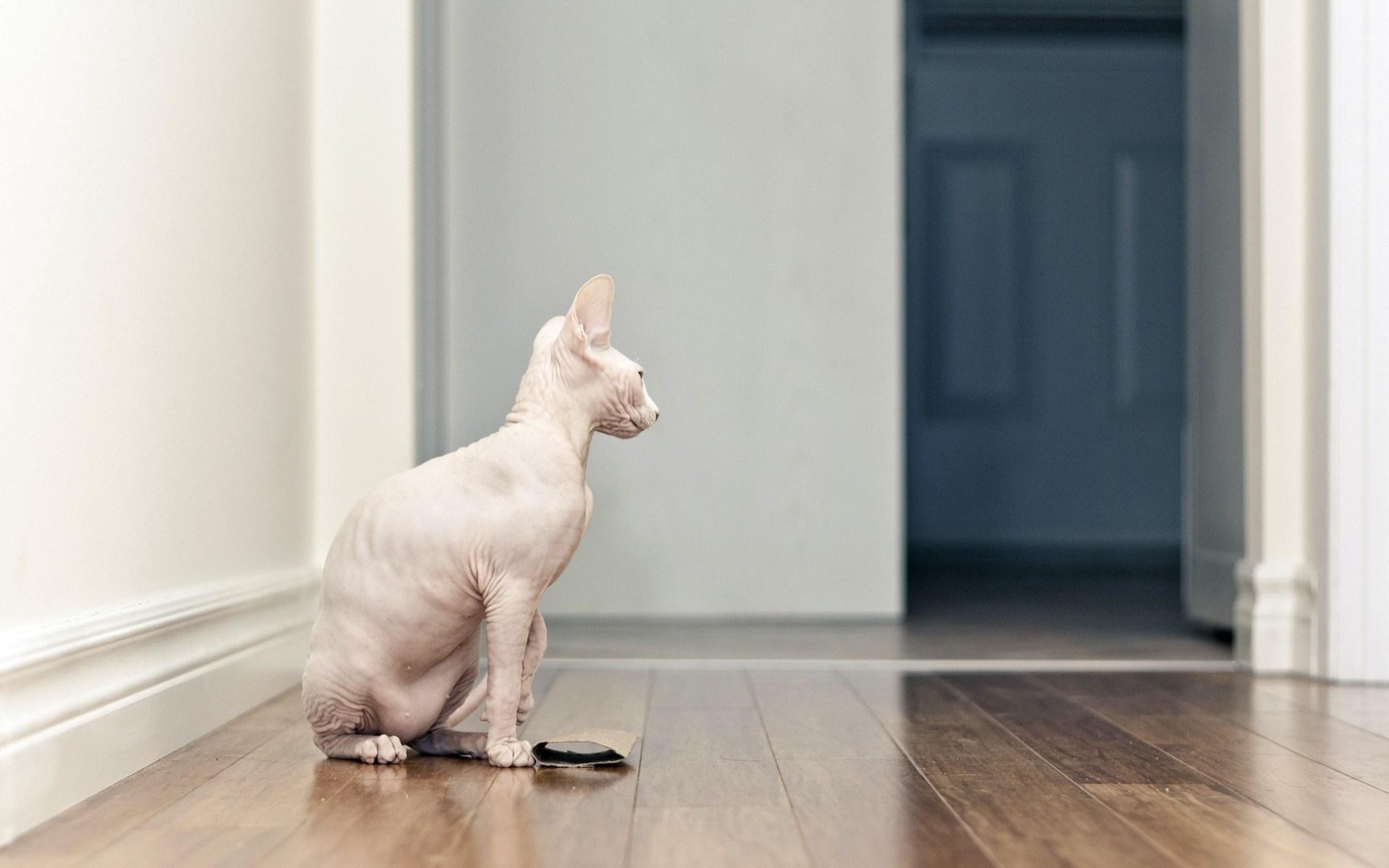 hd wallpapers cat