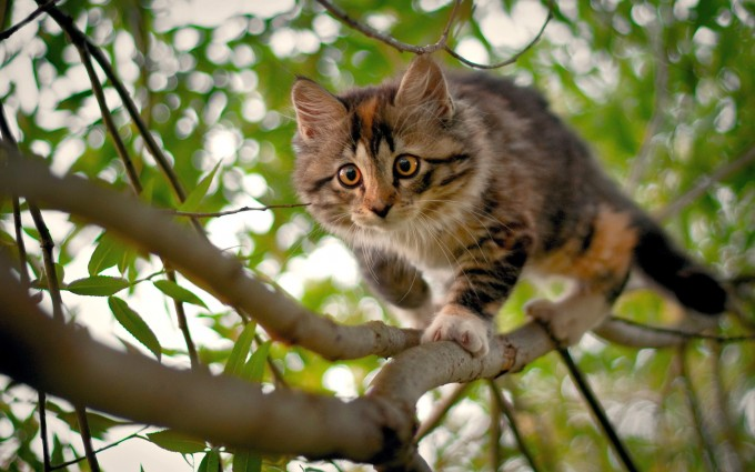 hd wallpapers cats