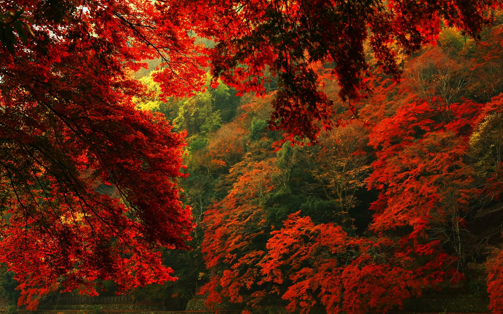 hd wallpapers forest red2