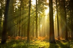hd wallpapers forest sunlight