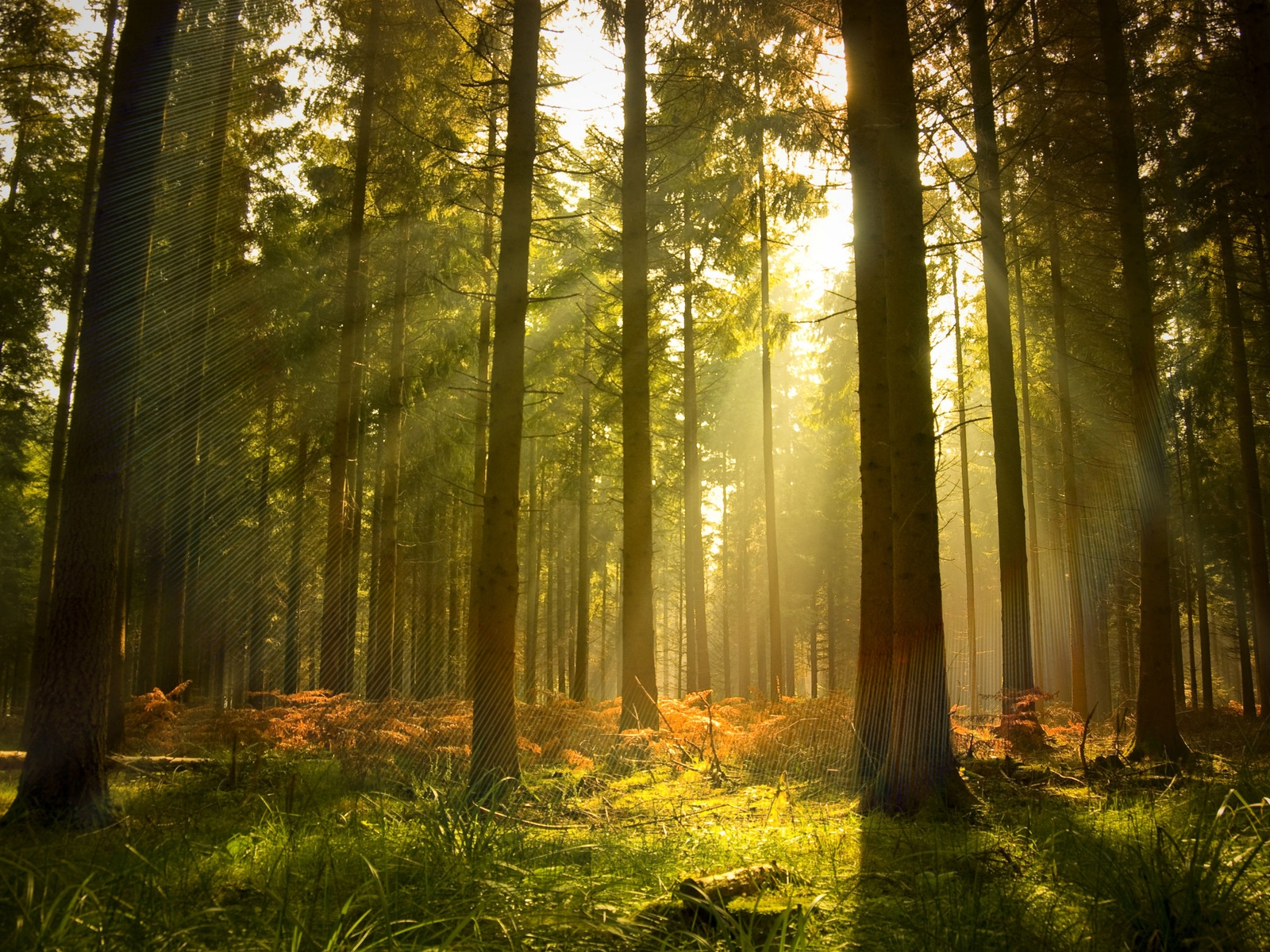 hd wallpapers forest sunlight