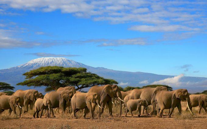 herd wallpaper animal