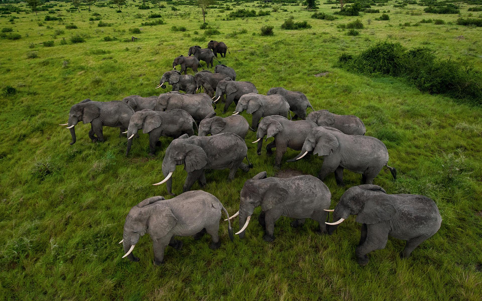 herd wallpaper