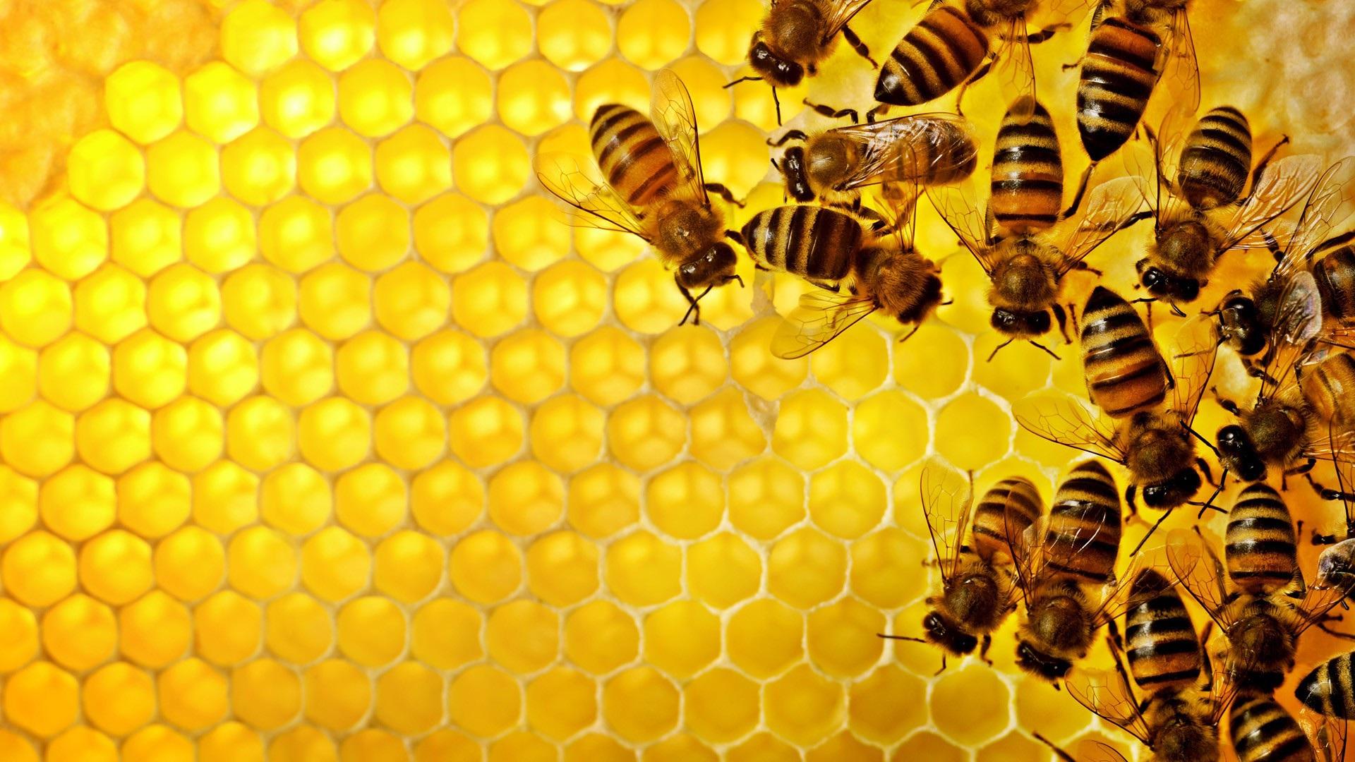 honey bee movie wallpaper