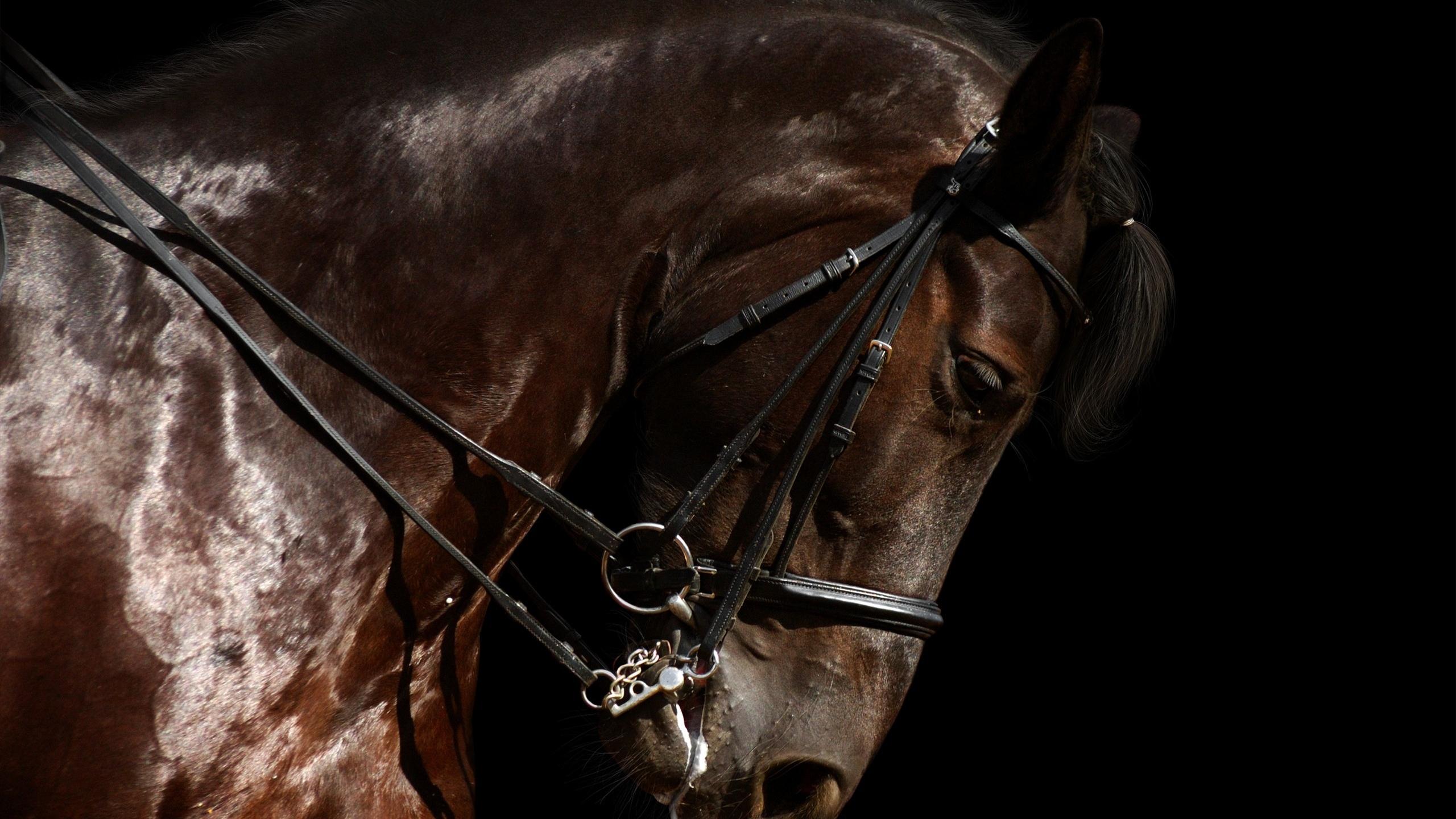 Horse Close Up Photography - Hd Desktop Wallpapers  4K Hd-4858