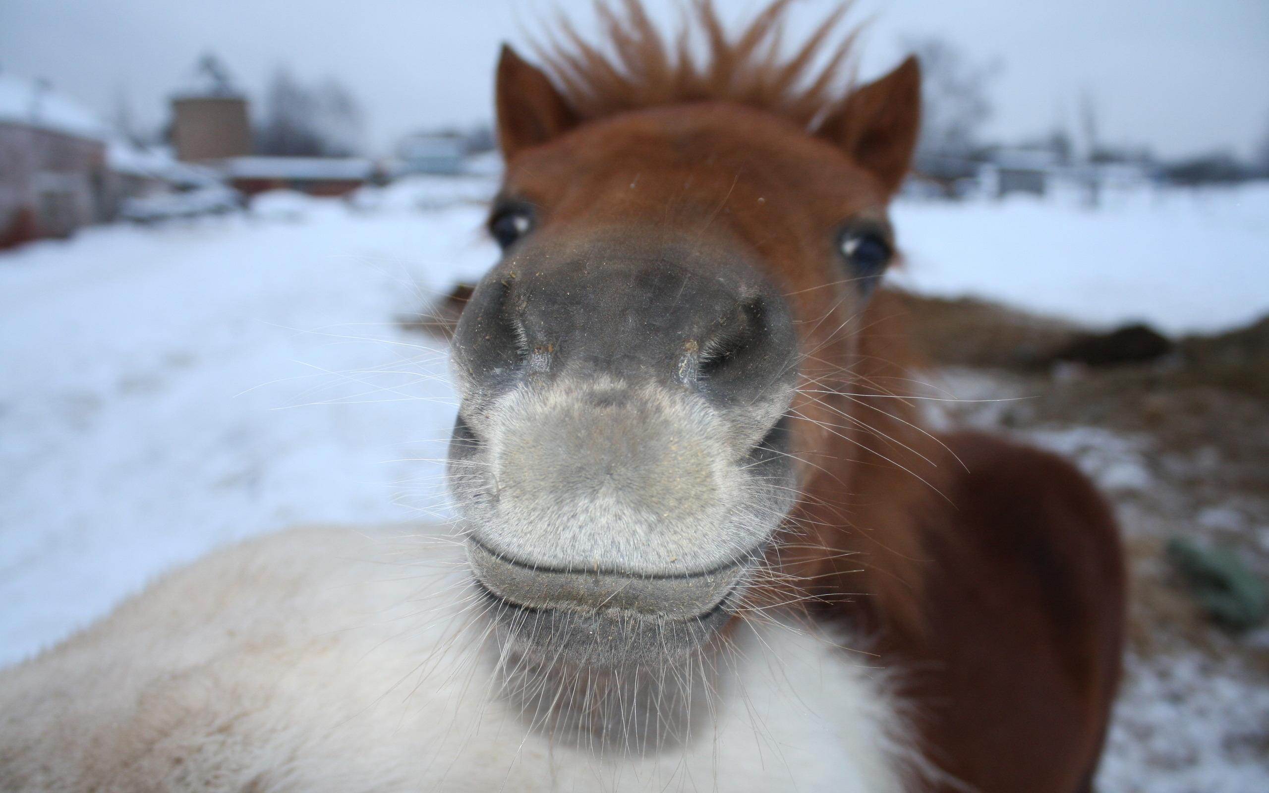 horse funny hd