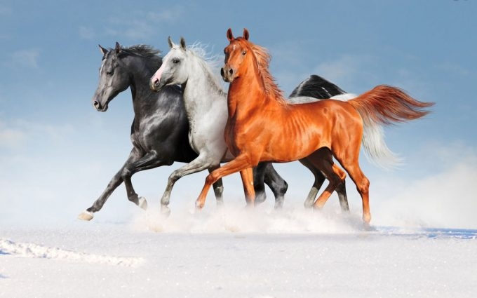 horse images photos wallpapers