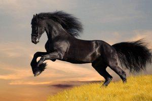 horse magnificent