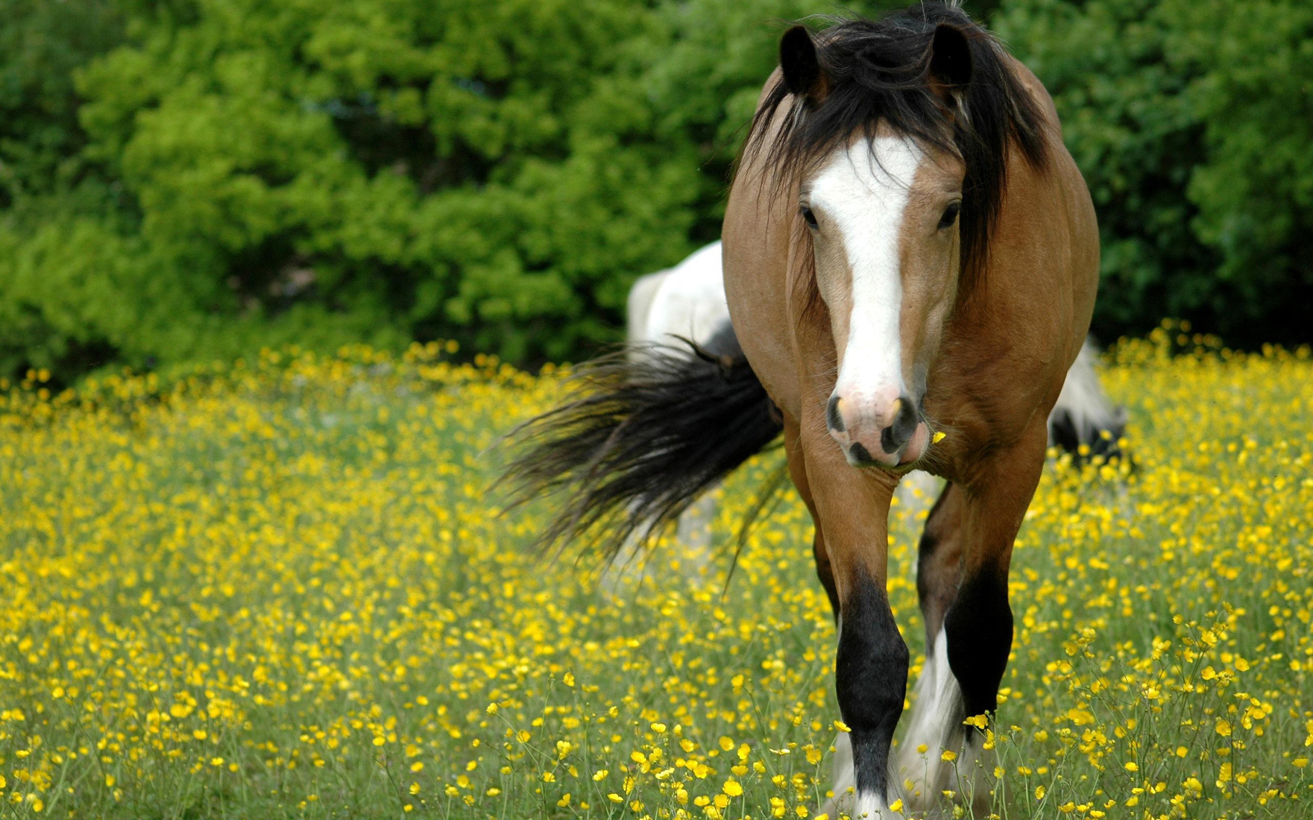 Horse Meadow Hd - Hd Desktop Wallpapers  4K Hd-7008