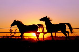horse pictures A19