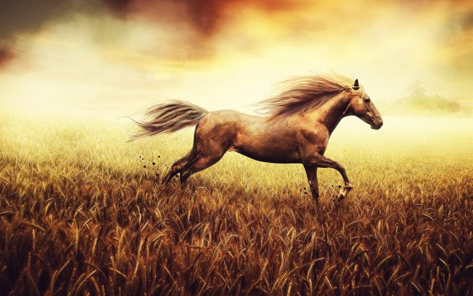 horse pictures A26
