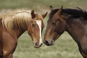 horse pictures love