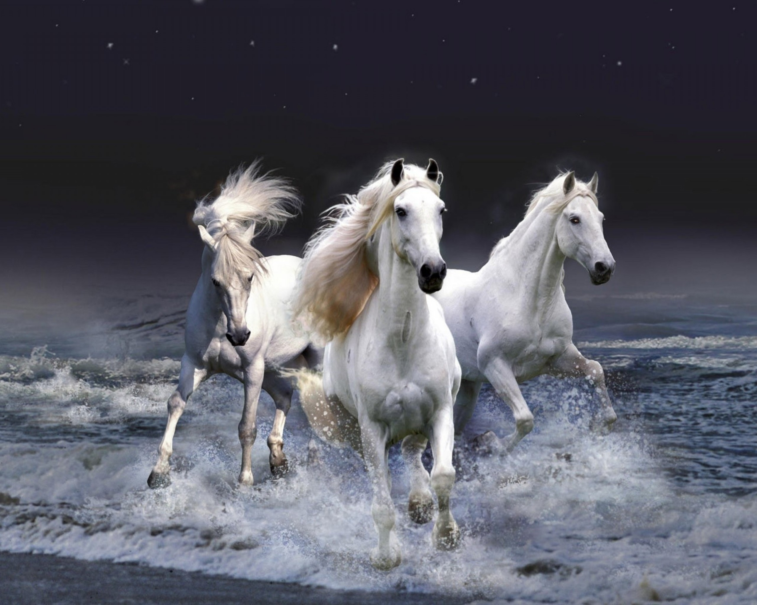 horses pictures A16
