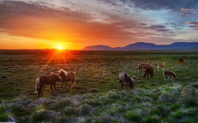 horses pictures A22