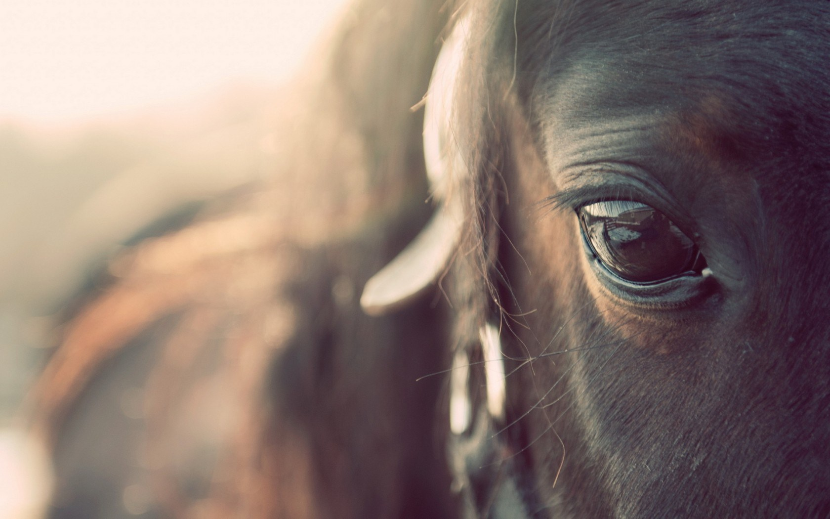 Horses Pictures A23 - Hd Desktop Wallpapers  4K Hd-9013
