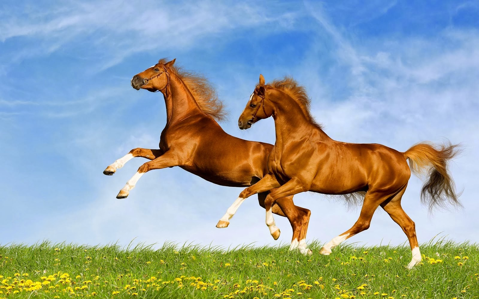 horses playing