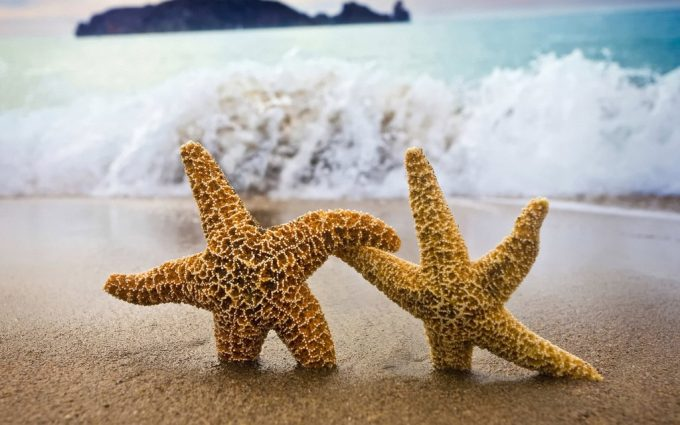 how to make star fish
