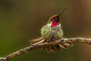 hummingbird wallpaper cute
