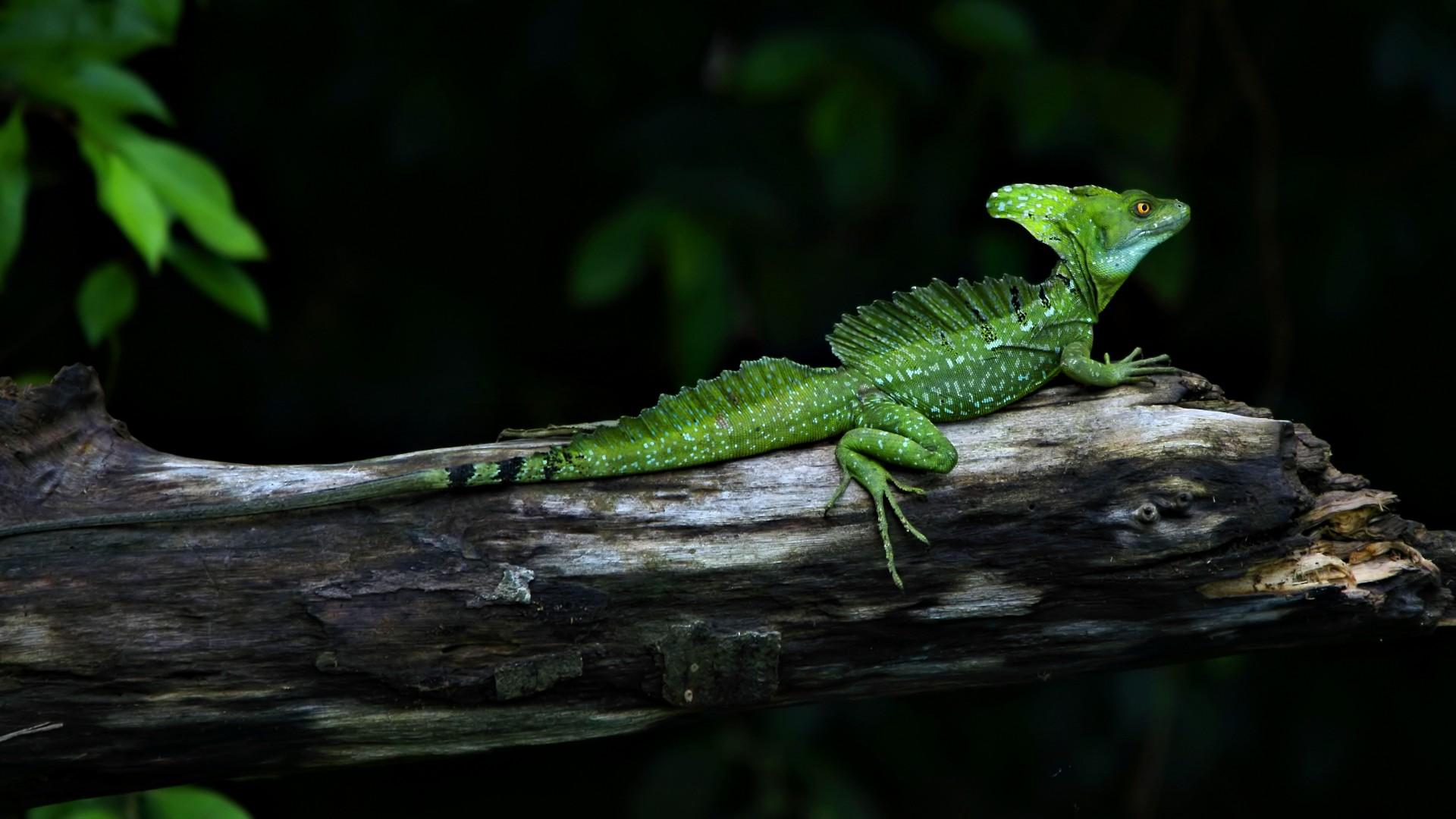 image of a lizard