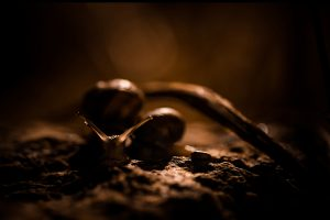 image of a snail