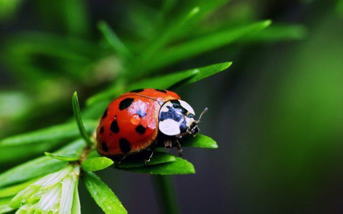 image of ladybug