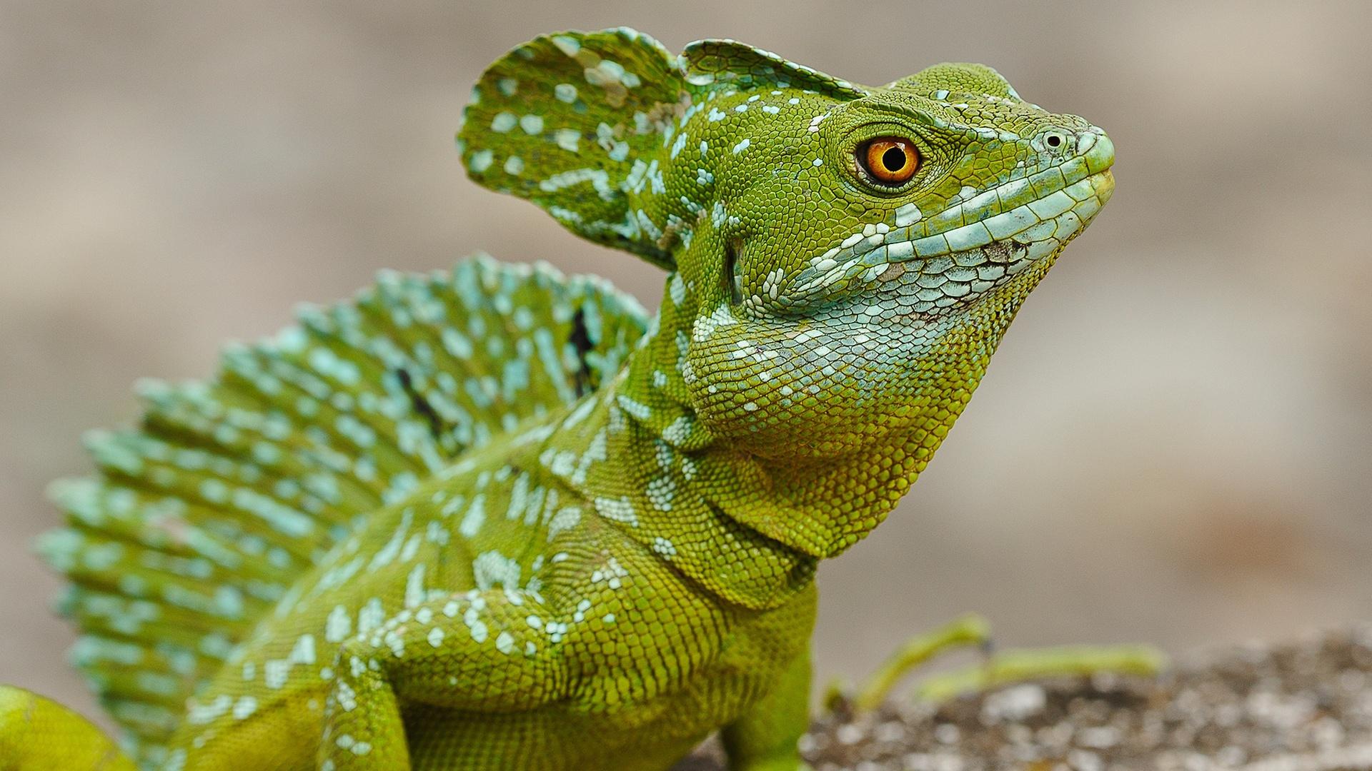 images lizard