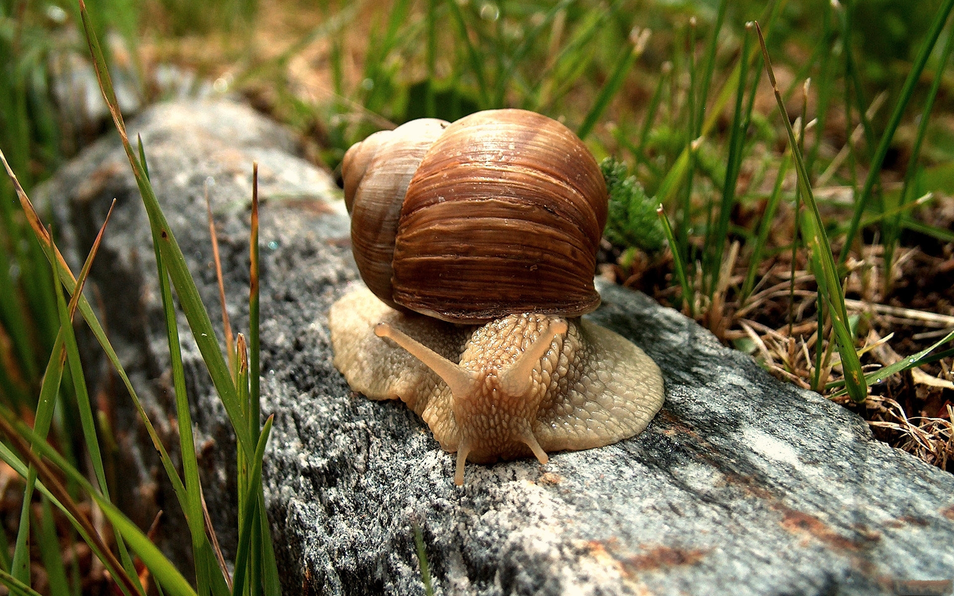 images of a snail