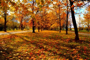 images of fall leaves hd