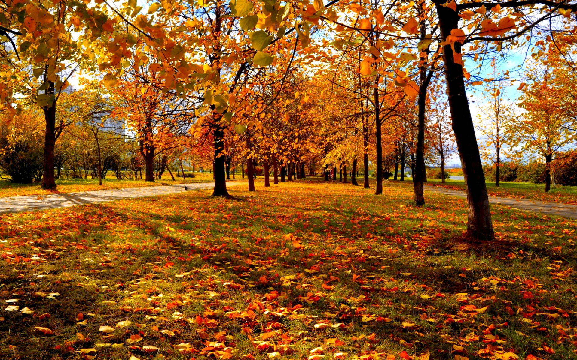 Images Of Fall Trees Hd Hd Desktop Wallpapers 4k Hd