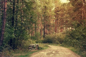 images of forests cool