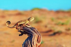 images of lizard