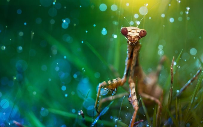insect images hd