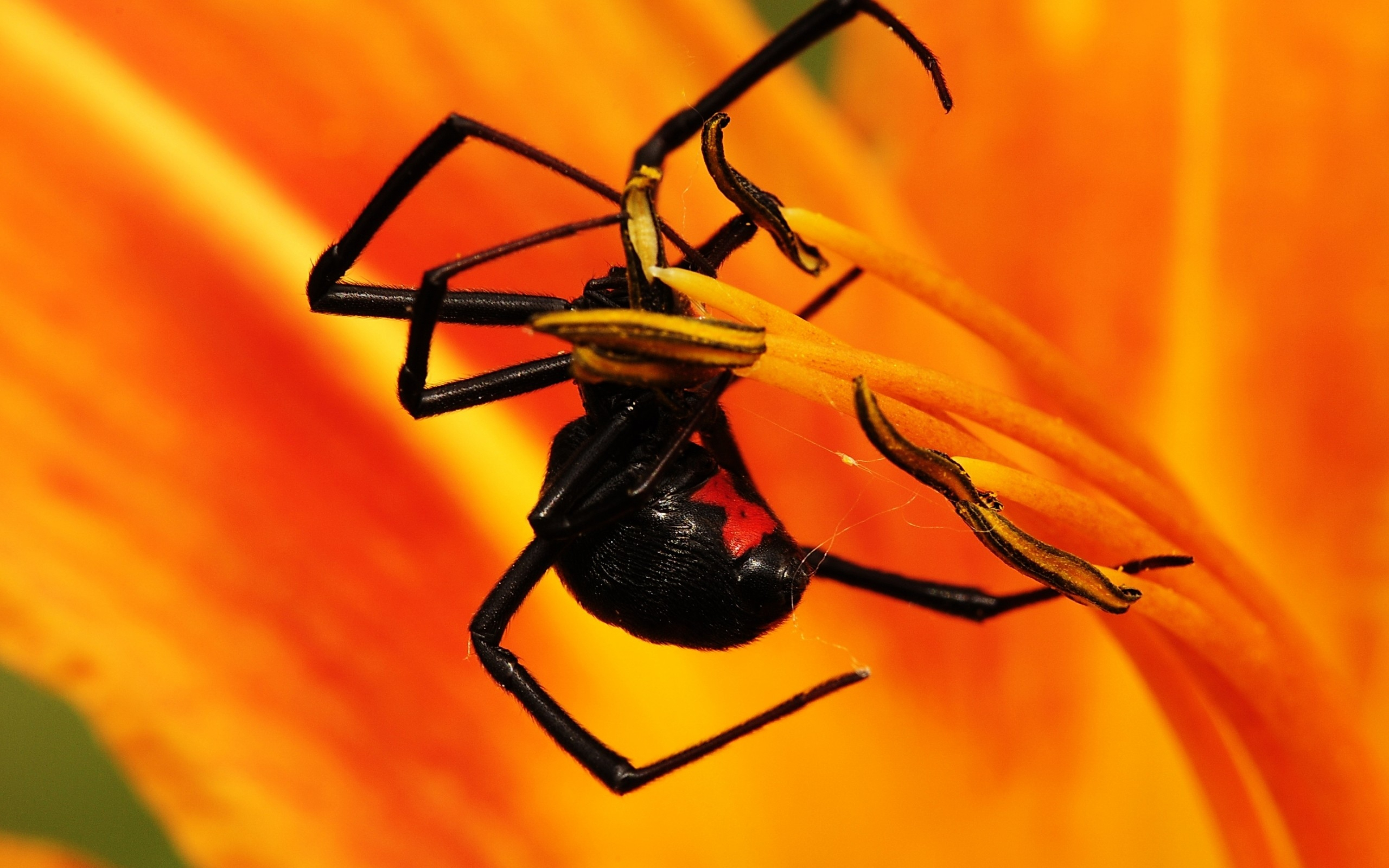 insect wallpaper wall coverings