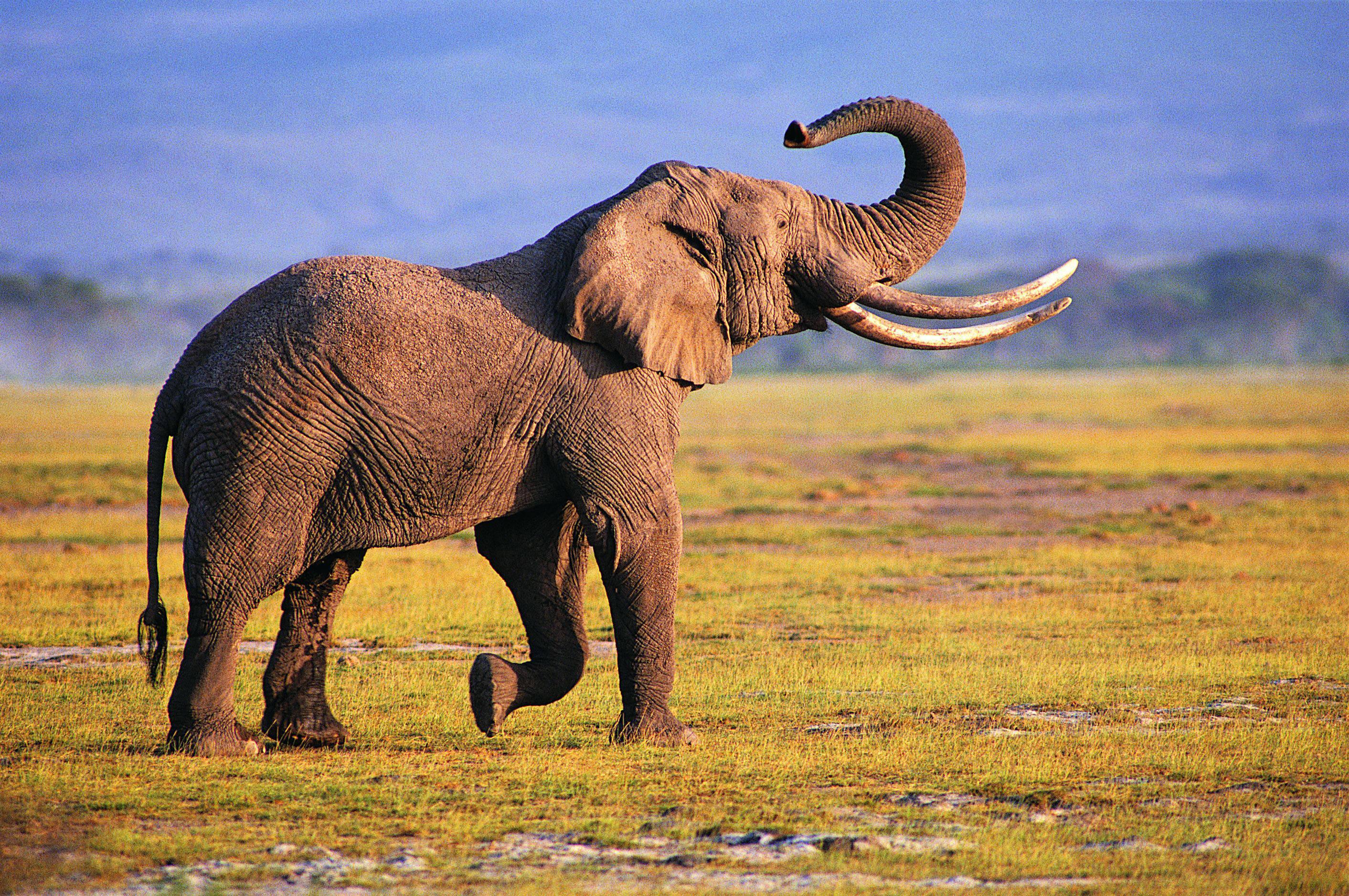 kerala elephant hd pictures