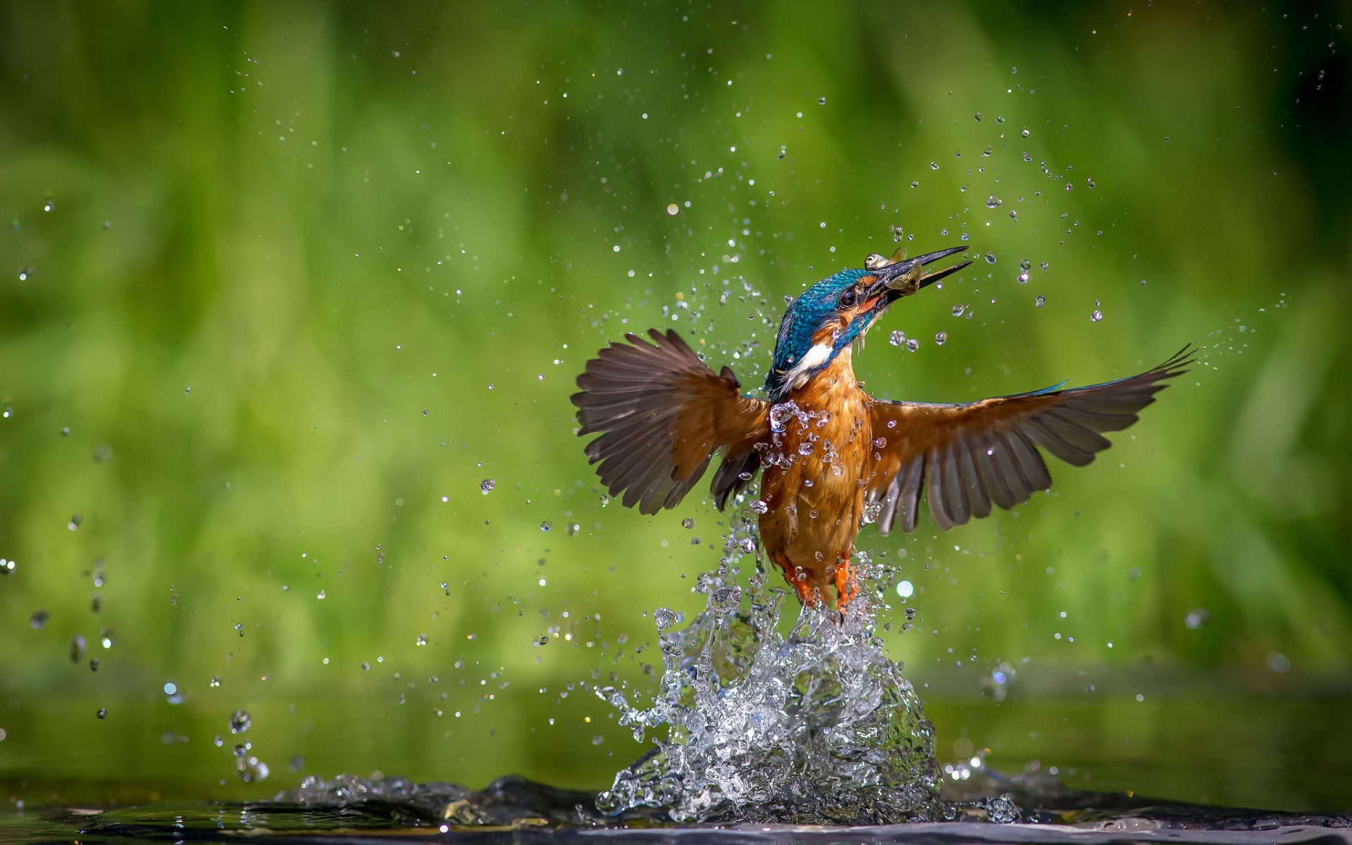 kingfisher bird pictures